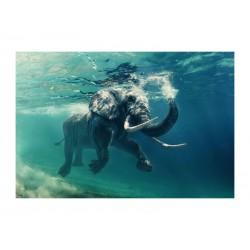 OBRAZ ELEPHANT 120X80