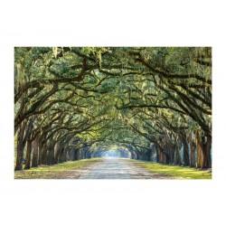 OBRAZ TREES I 120X80