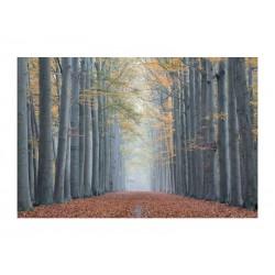 OBRAZ TREES II 120X80
