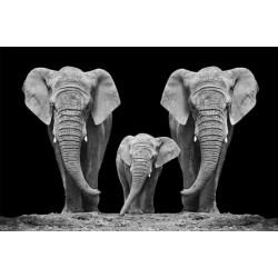 OBRAZ ELEPHANT FAMILTY 120X80